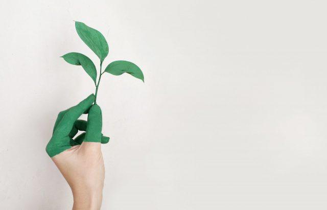 Hand met een plantje